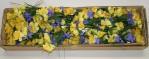 Narcissus Lilac X 3 Daffodil X 3 Lilac Pick (Box Of 72/pcs @ $0.29/each)