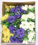 Petunia's W/Baby's Breath (Box Of 72/pcs @ $0.29/each)