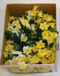 Daffodil Picks (Box Of 120/pcs @ $0.29/each)
