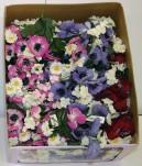 Spring Picks (Box Of 96/pcs @ $0.29/each)